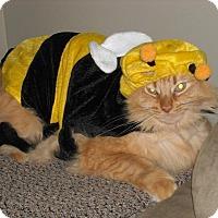 Adopt A Pet :: Oscar—Foster or Adopt! - Kirkland, WA