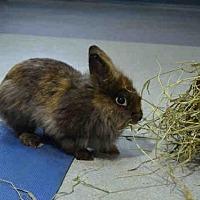 Adopt A Pet :: LION - Pittsburgh, PA