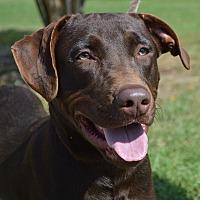 Adopt A Pet :: Major - CRANSTON, RI