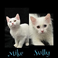 Adopt A Pet :: Sully171205 - Atlanta, GA