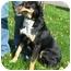 Photo 2 - Shepherd (Unknown Type) Mix Dog for adoption in Osseo, Minnesota - Buddy