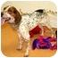 Photo 2 - Hound (Unknown Type) Mix Dog for adoption in Cincinnati, Ohio - Merle