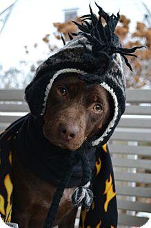 Dachshund/Hound (Unknown Type) Mix Dog for adoption in Freeport, New York - Willis