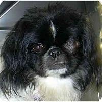 Adopt A Pet :: Kimu-DE - Mays Landing, NJ