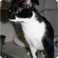 Adopt A Pet :: Lucia - Marietta, GA