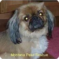 Adopt A Pet :: Rocco- ADOPTED - Columbia Falls, MT