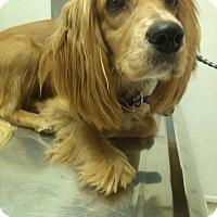 Adopt A Pet :: EMMA - Tacoma, WA