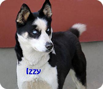 Husky Mix Dog for adoption in Idaho Falls, Idaho - Izzy