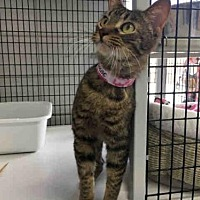 Adopt A Pet :: PHOEBE - Canfield, OH