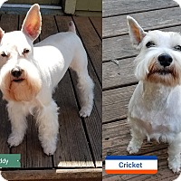 Adopt A Pet :: Cricket & Buddy-ADopted! - Southeastern, KS