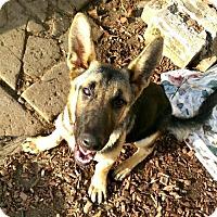 Adopt A Pet :: Mia - Sunnyvale, CA