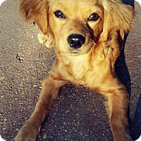 Adopt A Pet :: Buttercup - Kenner, LA