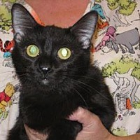 Adopt A Pet :: Ebony - Wildomar, CA