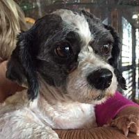Adopt A Pet :: Roger Hicks - Seattle, WA
