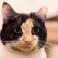Adopt A Pet :: Mittens - Philadelphia, PA