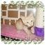 Photo 1 - Domestic Shorthair Kitten for adoption in KANSAS, Missouri - Sunny
