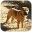 Photo 1 - Shar Pei Mix Puppy for adoption in Muldrow, Oklahoma - LEO