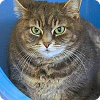 Adopt A Pet :: Honey - Victor, NY