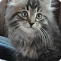 Adopt A Pet :: Royce - Columbus, OH