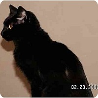 Adopt A Pet :: Blackie - Milford, OH
