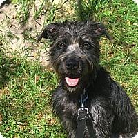 Adopt A Pet :: Mercedes - Jacksonville, FL