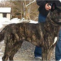 Adopt A Pet :: Nala - East Amherst, NY