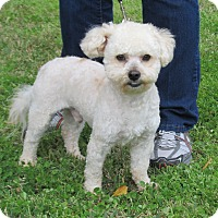 Adopt A Pet :: Dusty - Kingwood, TX
