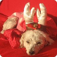 Adopt A Pet :: Vixen-WATCH MY VIDEO!!! - Irvine, CA