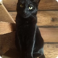 Adopt A Pet :: Piglet - Duncan, BC