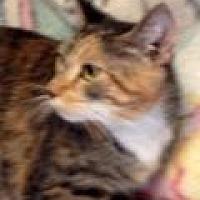 Adopt A Pet :: Adele - Porter, TX