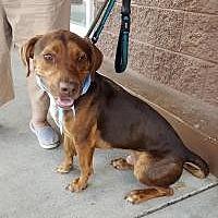 Adopt A Pet :: Plato - Smyrna, GA