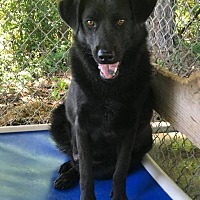 Adopt A Pet :: Jersey - Butler, AL