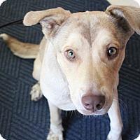 Adopt A Pet :: Ruby - Claremore, OK