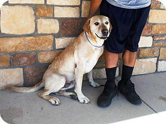 Labrador Retriever Dog for adoption in Artesia, New Mexico - Mickey
