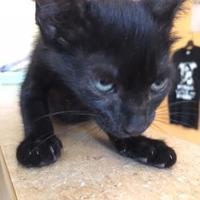 Adopt A Pet :: COAL - St. Thomas, VI