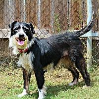 Adopt A Pet :: Harriet - Shreveport, LA