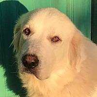 Adopt A Pet :: Jenna - Kiowa, OK