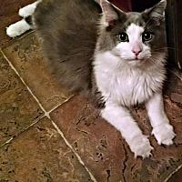 Adopt A Pet :: Louie - Petersburg, VA