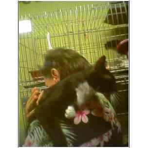 Domestic Shorthair Cat for adoption in Owasso, Oklahoma - Minnie Pearl