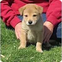 Adopt A Pet :: Sidekick - Westbrook, CT