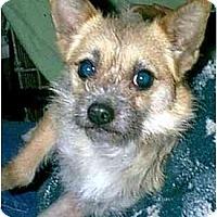 Adopt A Pet :: Muffy - dewey, AZ
