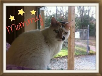 Domestic Shorthair Cat for adoption in Ocean View, New Jersey - Mommy