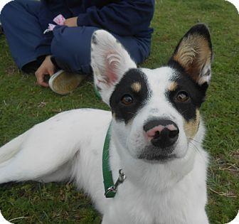 Terrier (Unknown Type, Medium) Mix Dog for adoption in Lockhart, Texas - Winnie