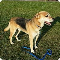 Adopt A Pet :: JASPER - Wilmington, NC