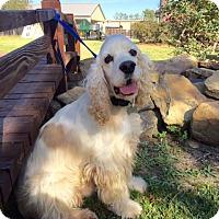 Adopt A Pet :: Journey - Sugarland, TX