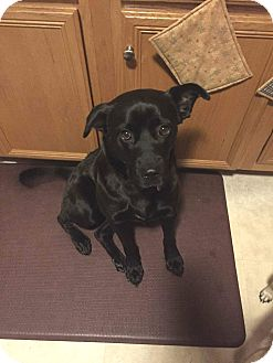 Labrador Retriever Mix Dog for adoption in Lancaster, Pennsylvania - Jovie