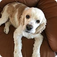 Adopt A Pet :: Samantha - Scottsdale, AZ