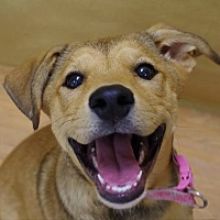 Adopt A Pet :: Sandie - Portland, IN