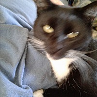 Adopt A Pet :: Cotton Tail - Pickens, SC