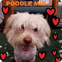 Adopt A Pet :: ALEX - Gustine, CA